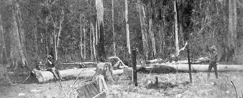 Site of the Stringybark Creek gunfight, photographed by Burman, a week after the police killings. Locals represent, from left, Ned Kelly, McIntyre and Kennedy. Positions are very rough approximations. Image: Victoria Police Historical Unit